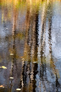 Reflection 12_1ASmall